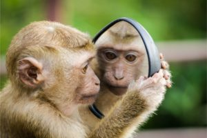 monkey looking at a mirror